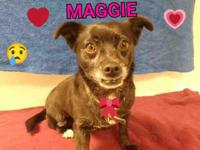Maggie is a charming 7 year old doxie mix girl and