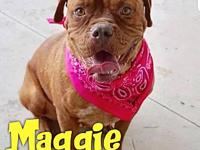 Maggie's story Maggie is a 1-2 year old, female, Dogue