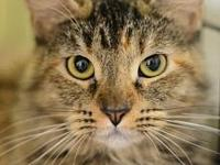 My story Hi, I'm Maggie. I'm a beautiful fluffy torti