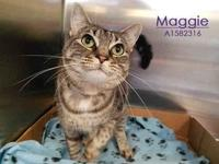 MAGGIE's story Maggie is a sweet girl, who loves people