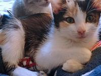 Maggie's story Description: cute calico Personality: