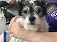 Maggie Mae's story Maggie Mae is a 10 year old Havanese