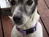 Maggie is a 13 year old black & white Australian Jack