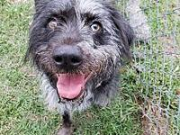 Maggie's story Maggie is a sweet 7 year old wire-haired