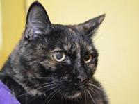 My story Maggie Meg is a super sweet senior lady. She