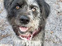 Maggie's story Maggie is a sweet 7 year old Wirehaired