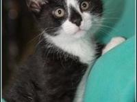MAGIC's story $97.50 FEE INCLUDES: neutering/spaying,