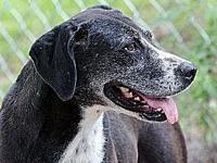 Magic's story Magic is one of four pups found in the