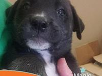 My story Magic is a black and white Retriever Mix. At 2