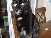 My story Magica is a wonderful 8 month old female who