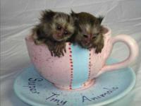 We have Magnificent Marmoset monkeys that need a place