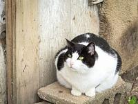 Magpie's story Magpie is a beautiful, outgoing,