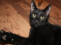 Magpie's story Magpie is affectionate and could easily