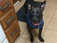 Mahlia's story You can fill out an adoption application