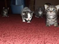 I have 4 kittens for adoption. They will have first