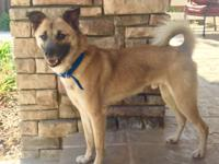 Maine is a 2 yr old Jindo/ Formosan Terrier mix that