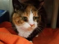Maisy is a quiet and shy girl, she would love a mild