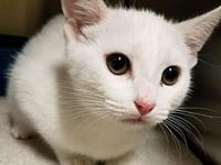 Maisy's story Maisy is an active kitten who loves the