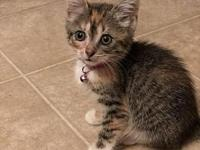 Maisy's story I am a spunky girl who loves to play! I