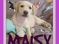 MAISY - P2's story Please contact Jenny Cope