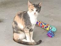 Maizey's story Maizey is the calico momma of Liza,