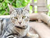 Makai's story - Makai is a handsome and loving little