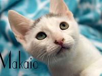 Makaio's story The adoption fee is $85.00 with an