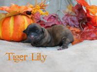 Beautiful Tiger Lilly is available. We are asking for a