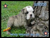 Rocco is ready for his new home soon. He comes UTD on