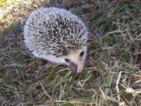 I have a male 8 month old hedgehog looking for a new