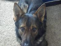 I have a 3 year old male and 5 year old pure bred GSD.