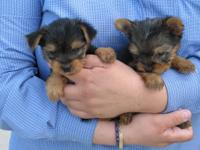 We have both males and females teacup Available.
