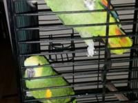 $600 for Amazon birds. $80 for the cage. Male and
