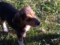 I have one male beagle pup. Up to date on shots and