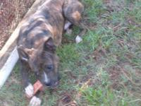 I have a male Boxer for sale. He turned 1 year old on