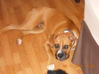 I have a male Boxer stud for breeding. i have a 100.00