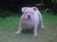 I got 3 male bullys going for a great price these are