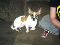 I have a 3 years of age male chihuahua named Taco. He