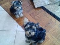 I have 2 male puppies all set for their new homes. 15
