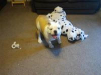we have a male english bulldog we are rehoming for