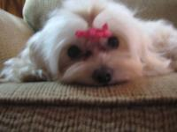 I have one male and female maltese for sale. The male