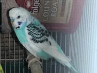 I have a male & female parakeet for free must go