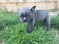Hey there! My name is Zac. I am a male Frenchton and I