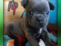 Hiya! My name is Kip and I am a male Frenchton and I