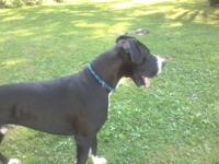 this guy is a great dog he is housetrained good on lesh
