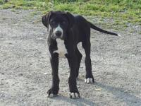Male mantle looking for a loving forever home. Born