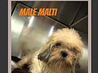 Male Malti's story Please complete our application at: