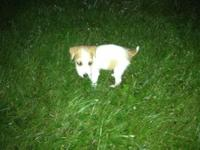I have a male malti poo puppy. The mother is a 4 pound