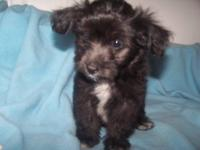 This little guy is a sweet puppy. He is 8 weeks old and