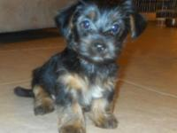 We have one left. He is an adorable little young puppy